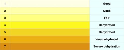 От чего зависит цвет мочи: при каких болезнях он меняется