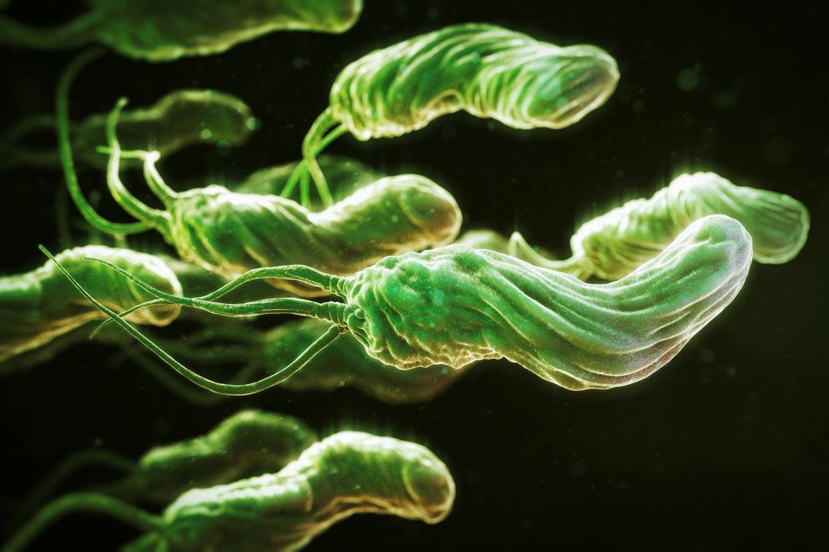 Лечение антибиотиками бактерии хеликобактер пилори