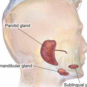 Воспаление слюнной железы у ребенка: как безопасно вылечить болезнь