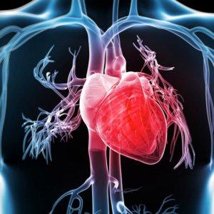 Симптомы сердечных заболеваний, диагностика на ранней стадии
