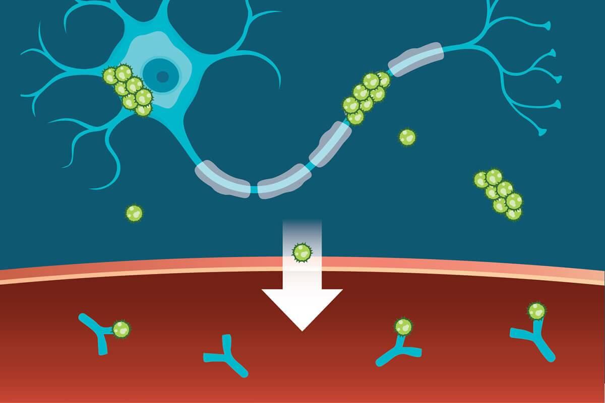 Движение белка в крови