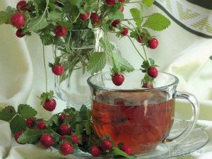 Чай из лесной земляники