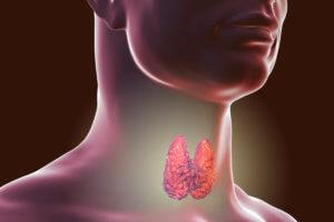Влияние на щитовидную железу