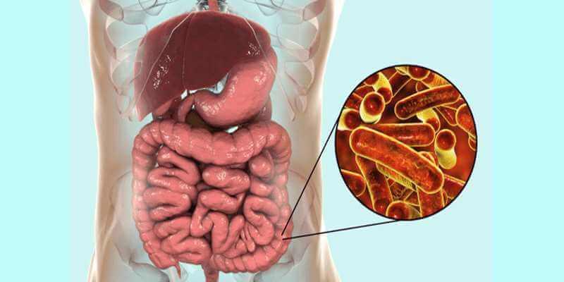 Развитие болезни в кишечнике