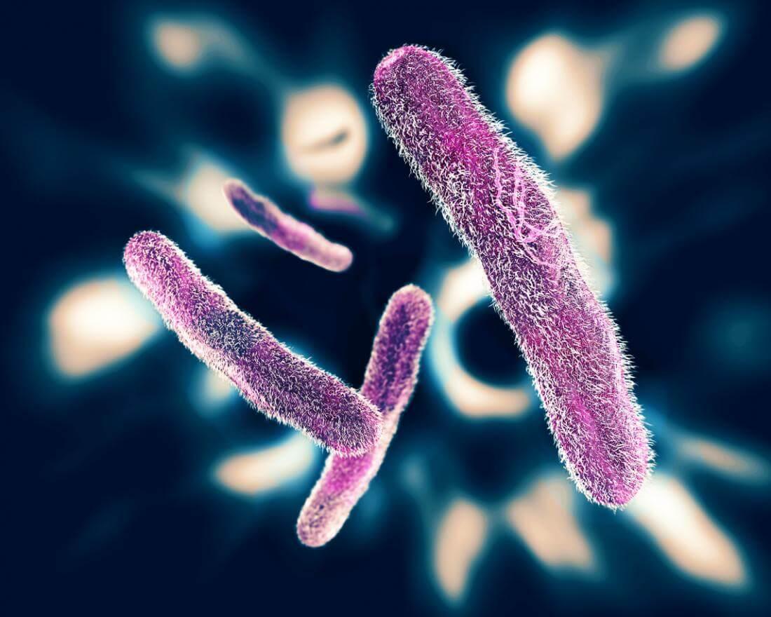 Клетки дизентерии