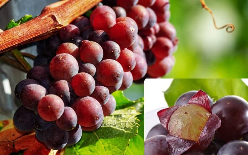 Кожура винограда