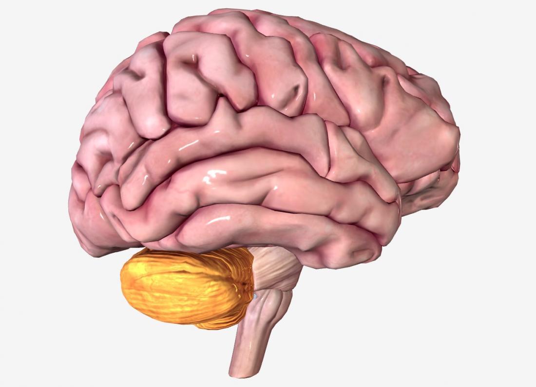 Мозжечок как часть мозга
