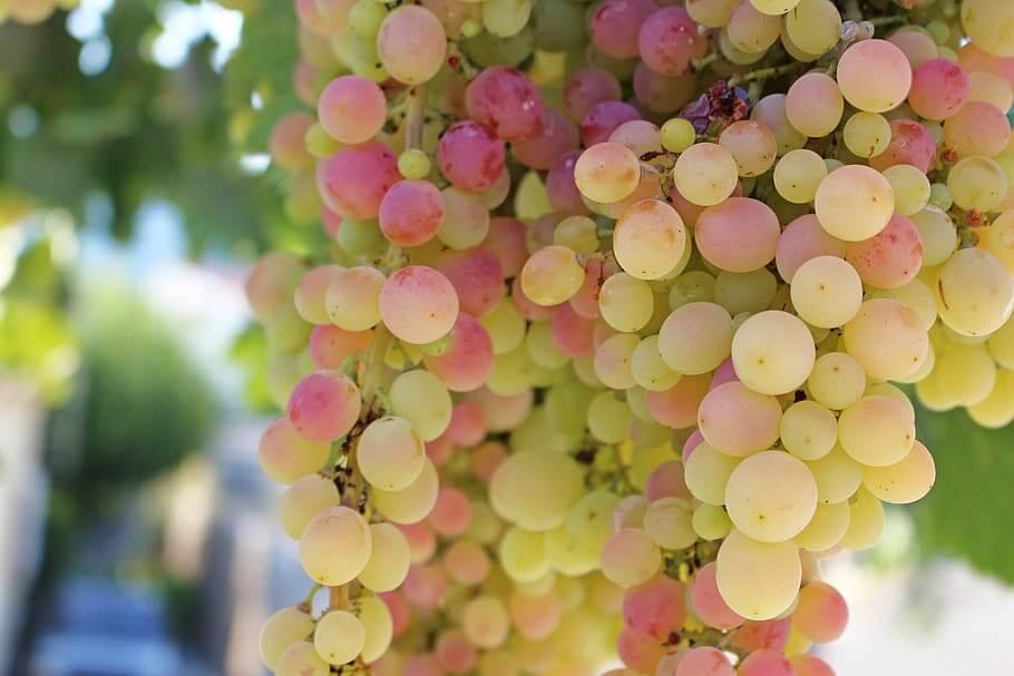 Что в составе винограда